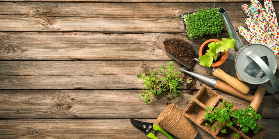 Le bon outillage de jardin pour commencer