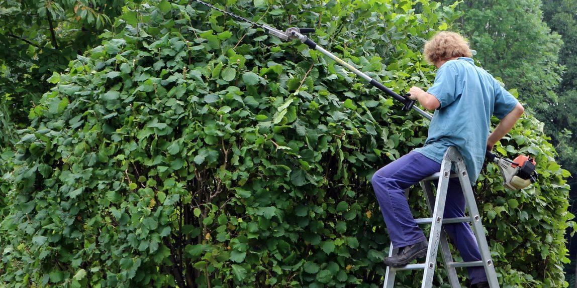 Abattre un arbre : les techniques et les solutions