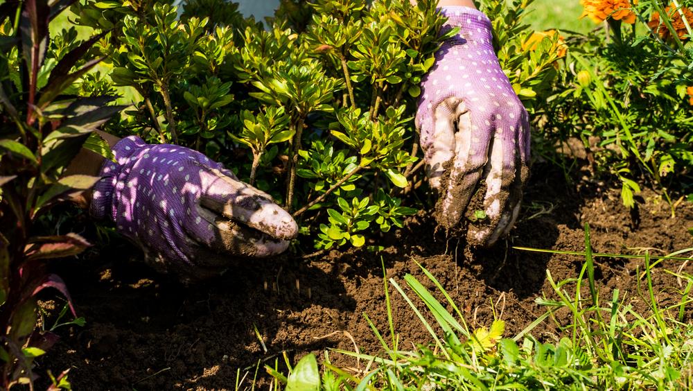 Désherber sans pesticides : est-ce possible ?