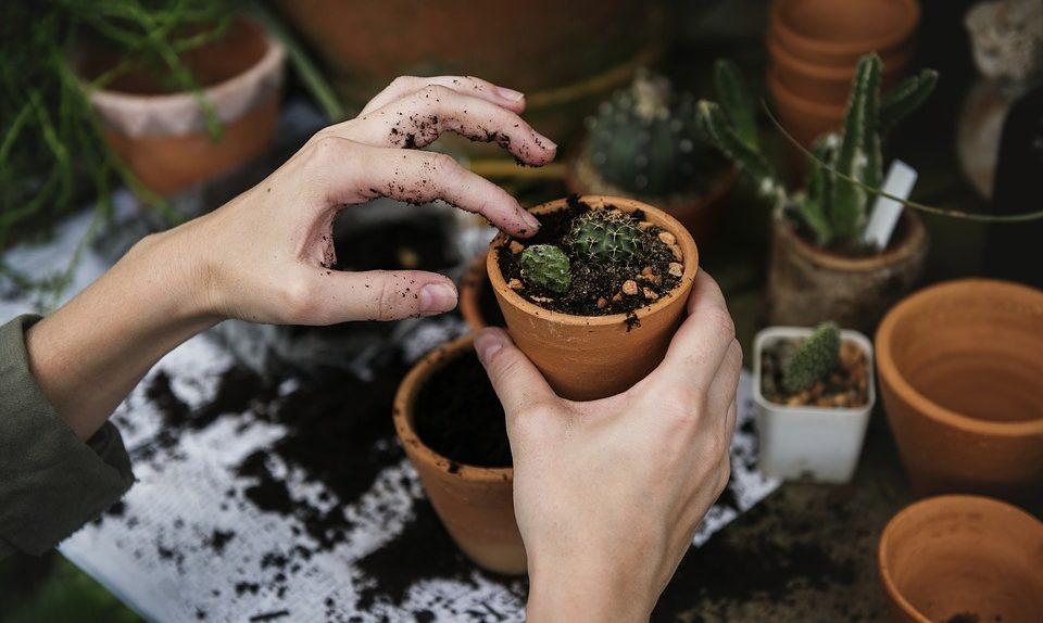 entretien de jardins