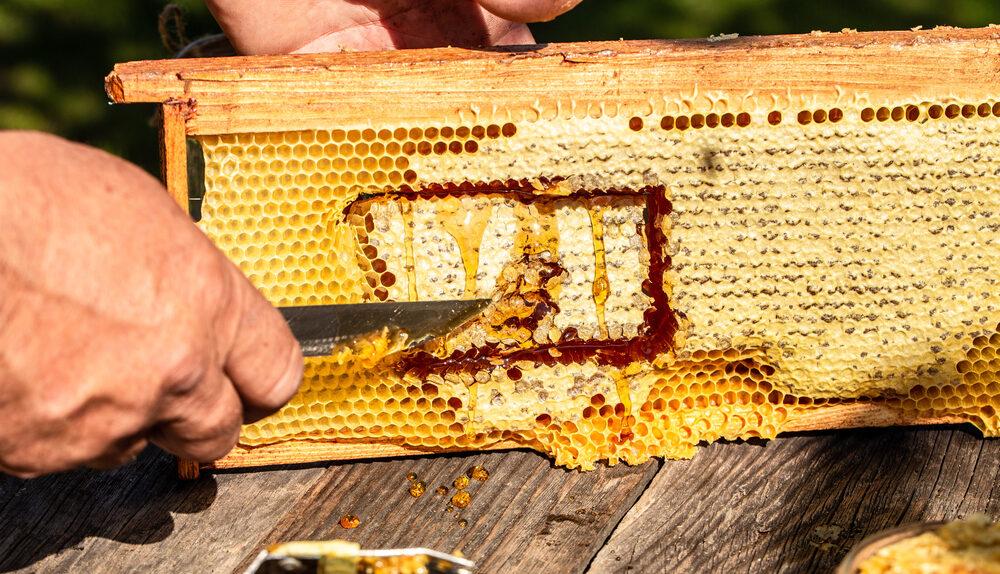 nourrissement des abeilles