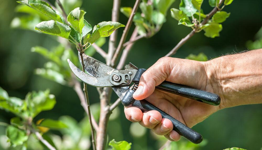 Conseils jardinage comment bien élaguer votre arbre